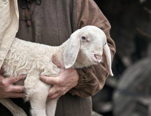 October Perspective   My Good Shepherd